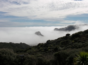 Piha in the mist